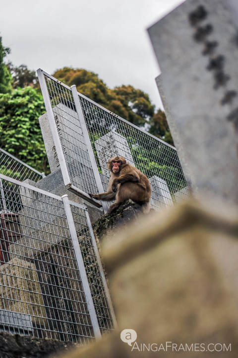This monkey diligently kept his eyes on the human intruders as the intruders make their way up the hill — the hill is home to more than 500 departed souls and each one is memorialized with a grave stone.