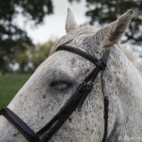 A sleepy horse - E-M1, 1/2500, f/ 2.8, ISO 800