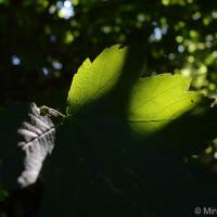 Leaf in the dark DSC-RX100M2, 1/100, f/ 2.8, ISO 160