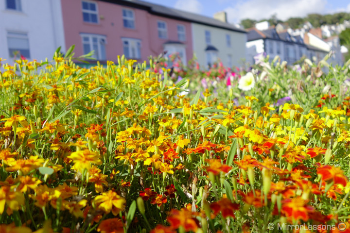 Flowers in Aberdovey DSC-RX100M2, 1/1600, f/ 2.8, ISO 160