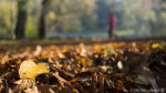 A shallow depth of field with a Micro 4/3s camera? Yes, it is possible!