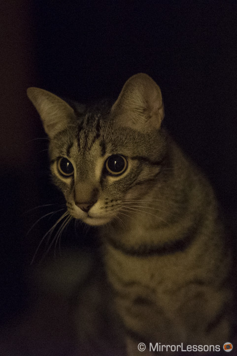 ILCE-7S, 1/100, f/ 18/10, ISO 51200