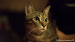 Through the Cat's Eye – A Sony A7s High ISO Mini Project
