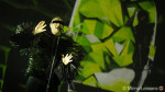 The Pet Shop Boys 'Electric' Tour – Using the Olympus OM-D E-M1 for concert photography