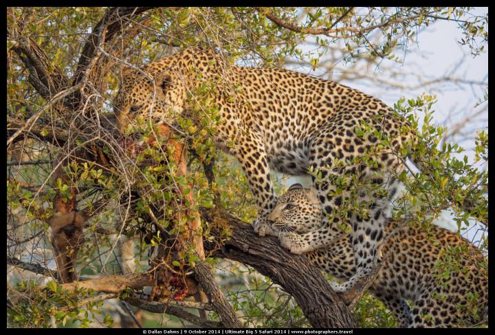 best camera for safari