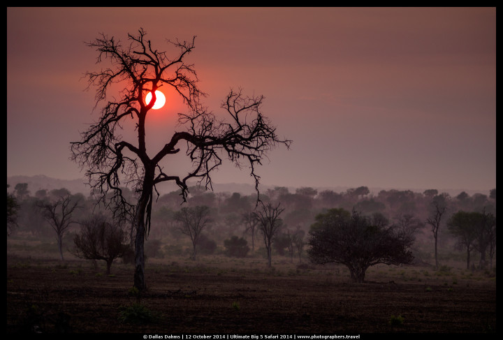 Sunrise on the last day of our adventure in Sabi Sands, South Africa - E-M1, 1/1000, f/ 1.8, ISO 200