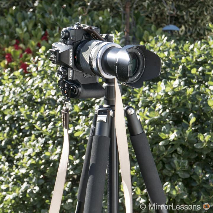 bird-photography-omd-em1-1