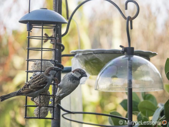 bird photography olympus
