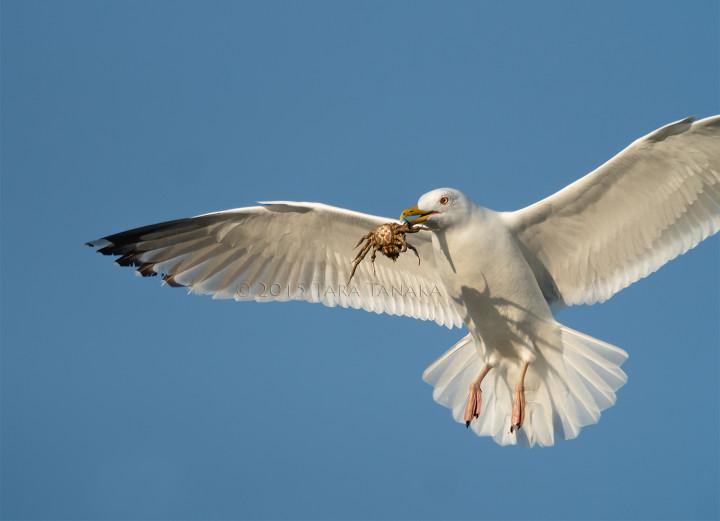 digiscoping birds
