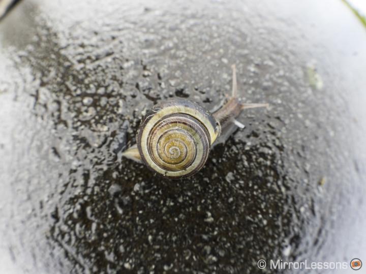 olympus m.zuiko 8mm f/1.8 fisheye