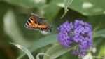 Using the Panasonic GX8 and 4K Photo for Insects in Flight