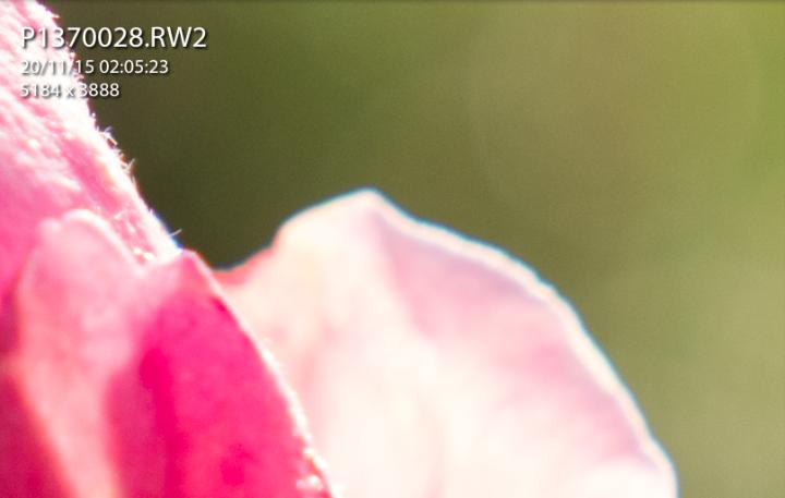 Chromatic aberration around the petals