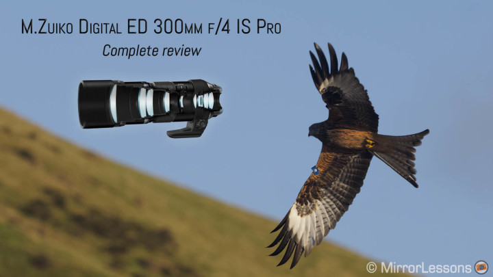 The first extreme telephoto prime – The Olympus 300mm f/4 IS Pro review