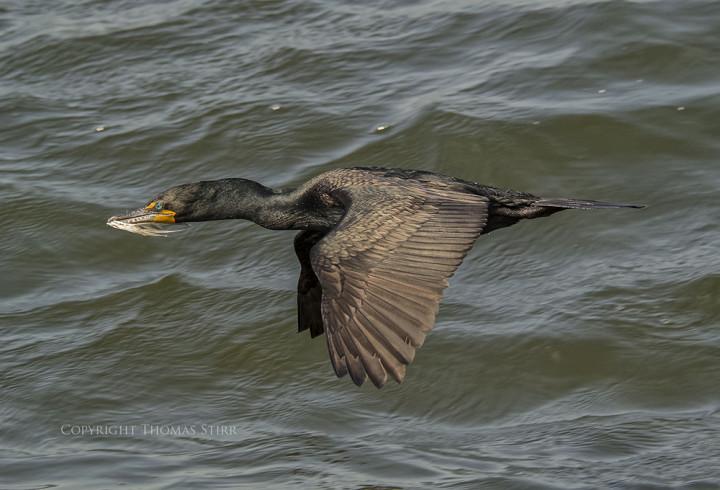 nikon 1 wildlife photography