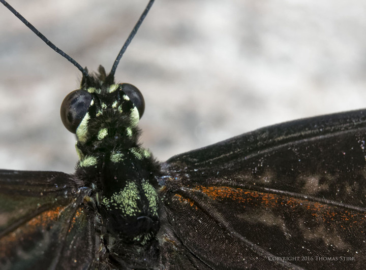 Caption: 59mm, f/8, 1/250, ISO-640, MOVO extension tubes