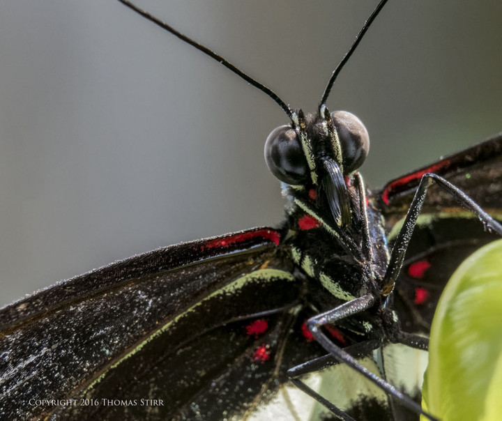 Caption: 62mm, f/8, 1/80, ISO-1800, MOVO extension tubes