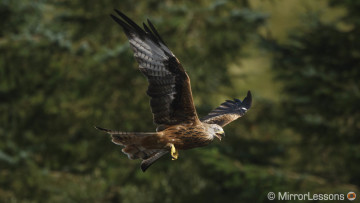 Sigma-MC-11-150-600mm-red-kites-featured