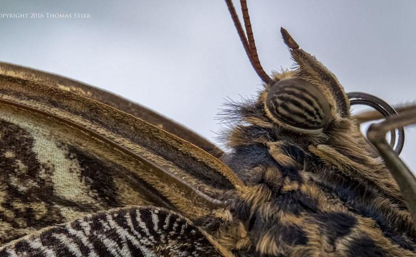 butterfly photography nikon 1-1