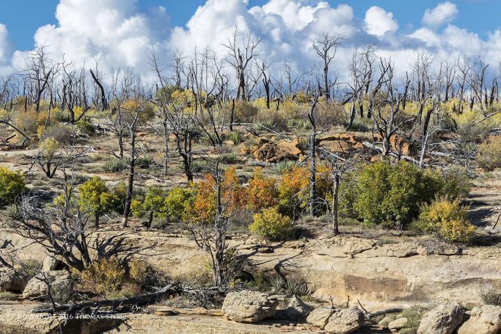 NIKON 1 J5 + 10-100mm f/4-5.6 @ 48mm, efov 130mm, ISO 160, 1/320, f/8.0. Mesa Verde National Park Colorado.