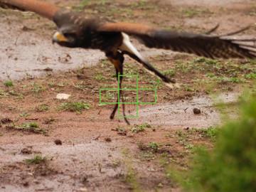 omd-em1-ii-5-area-bird-01