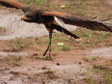 omd-em1-ii-5-area-bird-02