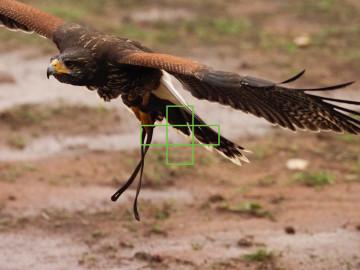 omd-em1-ii-5-area-bird-03