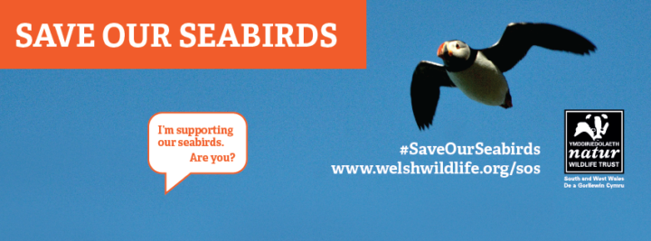save our puffins uk