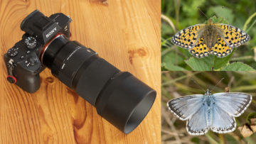 Sigma 70mm f/2.8 Macro on the Sony A7 III & A7r III: Butterflies at Prestbury Hill